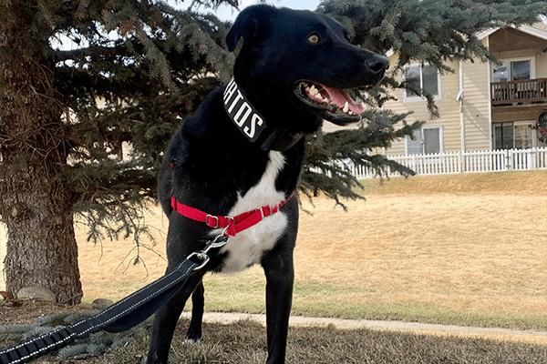 fast paws dog walk