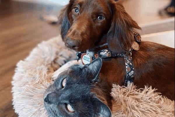 Premier Pet Sitting